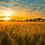 harvest jpeg